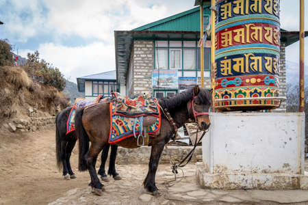 Two pack horses tied to a prayer wheel beside the trail.