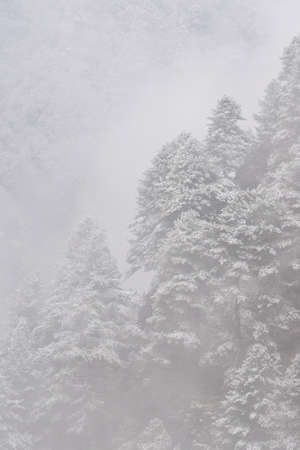 A snow covered tree covered hillside in the Himalaya Mountain.