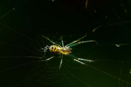 A macro shot of a spider on a web.