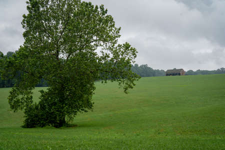 A Lone Tree in Wide Open Field with a barn on the ridge in the background. 免版税图像