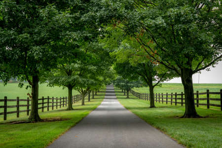 A paved road lined with trees on a cloudy summer day.