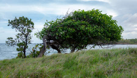 A tree with all the branches on one side by the sea shore.