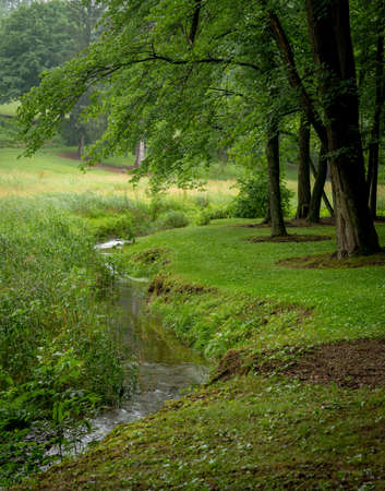 A small stream in a meadow lined with maple trees. 免版税图像