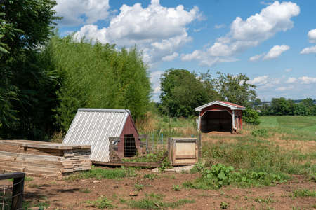 Two pig shelters in the pasture for protection from the elements.