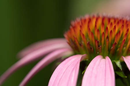 A shot of an Abstract Macro Cone Flower Background.