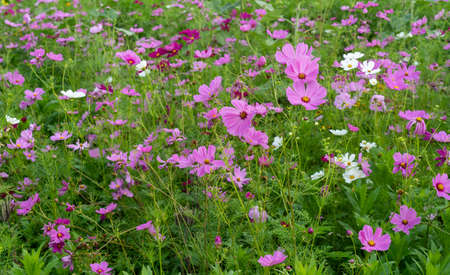 A field of very colorful wildflowers in the spring.