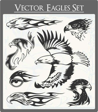 Eagle Vectors  Illustration