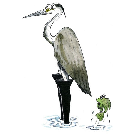 wading: heron wading