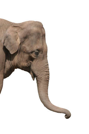 Close up of an elephants head isolated Stock Photo - 222880