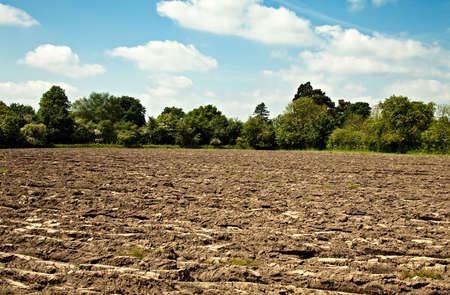 A rough ploughed field with a border of trees Stock Photo - 4992139
