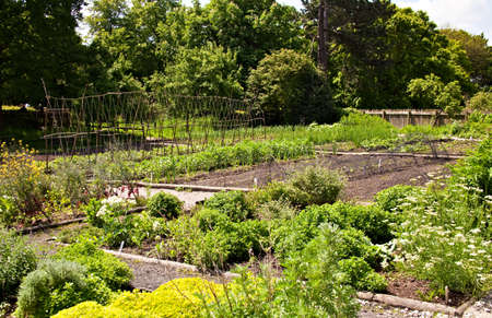 A neat vegetable garden with beds of various plants
