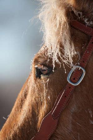 Mustang Horse Eye