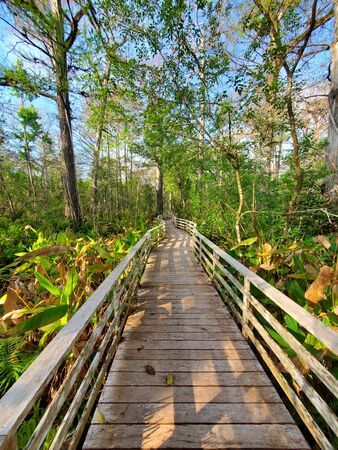 Boardwalk in Audobon Corkscrew Swamp Sanctuary, Florida Everglades Ecosystem - Nature Walking Trail, Protected Forest Swamp Ecosystem Zdjęcie Seryjne