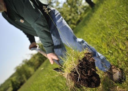 Man planting a tree sappling in a grassy field Stock Photo