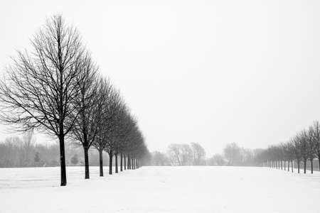 Black and White Avenue of Trees in Snowy landscape