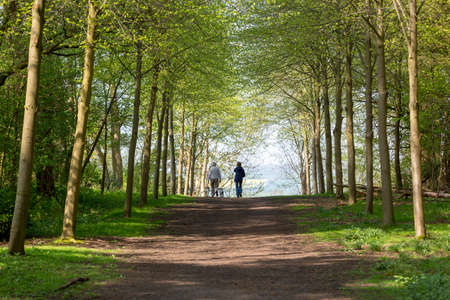 Footpath through Green Forest of Beech Trees in Spring with two people walking dogs in the distance Reklamní fotografie
