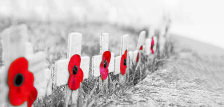Grainy black and white - Remembrance Day Poppies on wooden crosses, on frosty grass