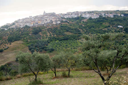 potenza: Basilicata (Potenza) - Oppido Lucano, ancient town and olive trees Stock Photo
