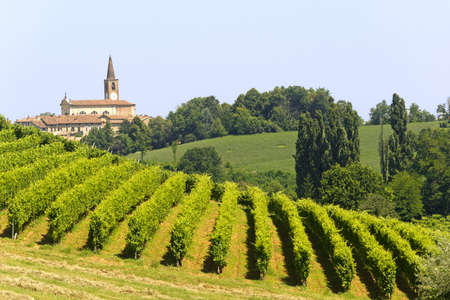 Landscape in the Oltrepo Pavese (Pavia, Lombardy, Italy) at summer Stock Photo - 10328425