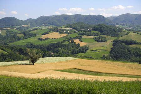 夏に Oltrepo パヴェーゼ (パヴィア、ロンバルディア州、イタリア) の風景します。 写真素材