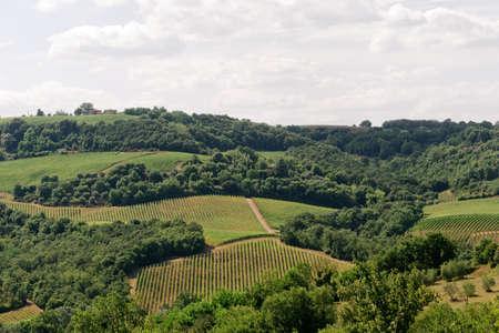 terni day: Landscape in Umbria (Terni) with vineyards