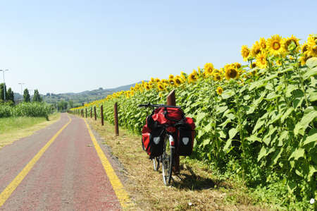 Lane for bicycles and sunflowers in Tuscany near Poggio a Caiano at summer Stock Photo - 10591069
