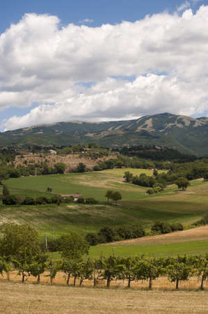 terni day: Landscape between Lazio and Umbria at summer, with vineyards