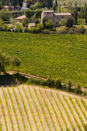 Landscape with vineyards at summer near Montepulciano (Siena, Tuscany, Italy) Stock Photo