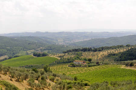 Hills in Tuscany near Artimino (Firenze, Italy) with olive trees at summer photo