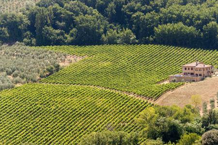 Landscape with vineyards at summer near Montepulciano (Siena, Tuscany, Italy) photo