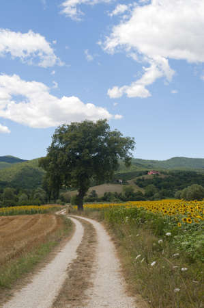 umbria: Landscape between Lazio and Umbria (Italy) at summer with sunflowers