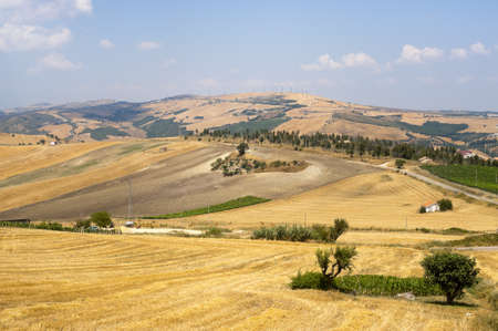 Landscape in Basilicata (Italy) near Acerenza at summer photo