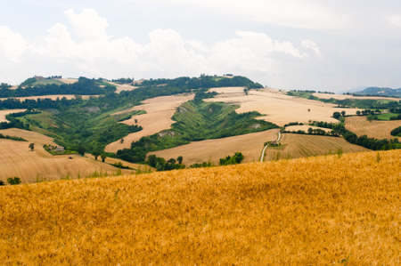 Marches (Italy) - Landscape at summer photo