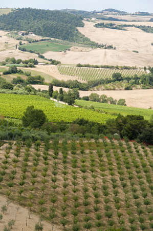 montepulciano: Landscape with vineyards at summer near Montepulciano (Siena, Tuscany, Italy) Stock Photo