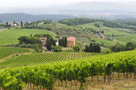 Hills of the Chianti region (Florence, Tuscany, Italy) with vineyards at summer Stock Photo - 10867900