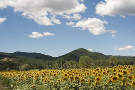terni day: Landscape between Lazio and Umbria (Italy) at summer with sunflowers