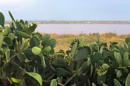 evaporation: Margherita di Savoia (Puglia, Italy): Salt evaporation pond and cactus