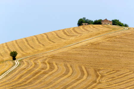 Marches (Italy) - Landscape at summer, farm photo