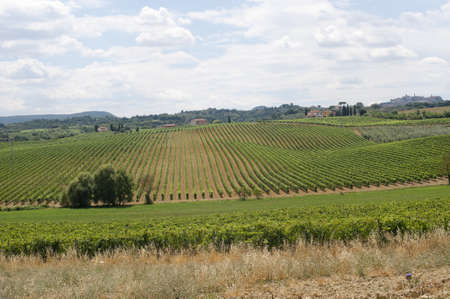 Landscape with vineyards at summer near Montepulciano (Siena, Tuscany, Italy) Stock Photo - 10898510