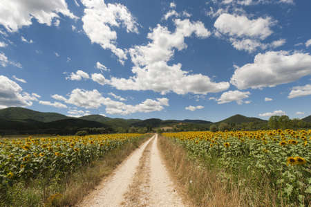 Landscape between Lazio and Umbria (Italy) at summer with sunflowers Stock Photo - 10898514