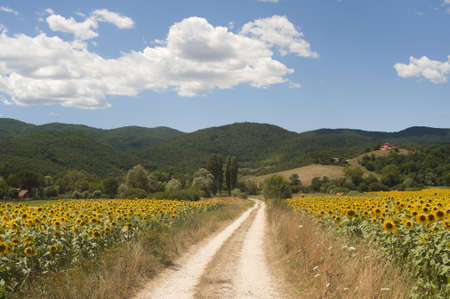 Landscape between Lazio and Umbria (Italy) at summer with sunflowers Stock Photo - 10942760