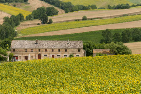 Marches (Italy) - Landscape at summer with sunflowers, farm photo