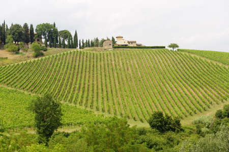 夏のブドウ畑とキャンティ地方 (フィレンツェ、トスカーナ、イタリア) の丘 報道画像