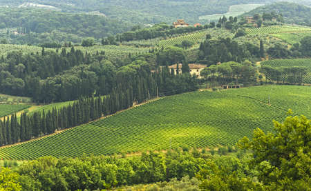 Hills of the Chianti region (Florence, Tuscany, Italy) with vineyards at summer Stock Photo - 11317865