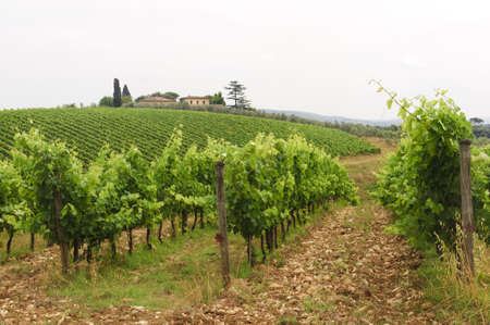 Hills of the Chianti region (Florence, Tuscany, Italy) with vineyards at summer Stock Photo - 11336058