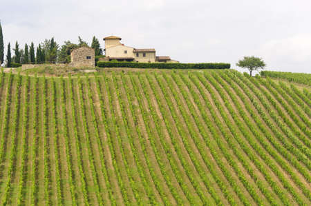 Hills of the Chianti region (Florence, Tuscany, Italy) with vineyards at summer Stock Photo - 11314285