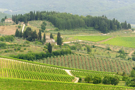 Hills of the Chianti region (Florence, Tuscany, Italy) with vineyards at summer photo