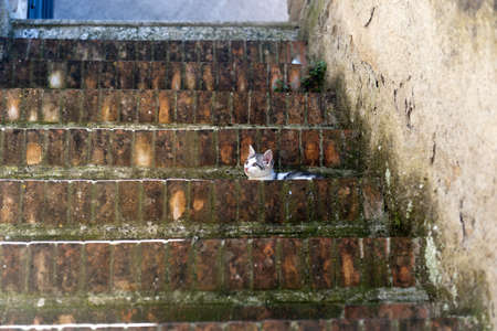 Sovana (Grosseto, Tuscany, Italy), cat on a staircase
