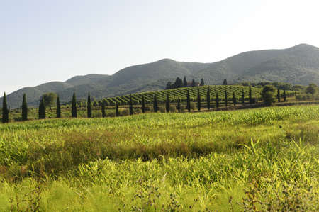 Landscape in Maremma (Tuscany, Italy) at summer photo