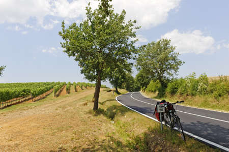 Maremma (Tuscany, Italy), country landscape with vineyards and bicycle at summer photo